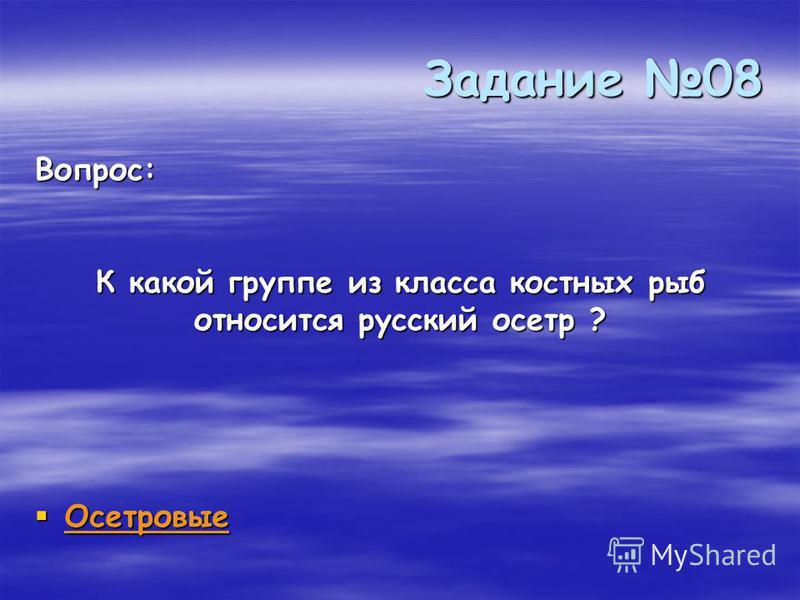 Задание 08 Осетровые Осетровые Вопрос: К какой группе из класса костных рыб относится русский осетр ?