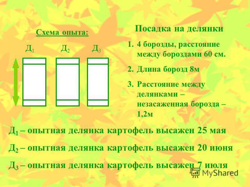Схема опыта: д 1 д 1 д 2 д 2 д 3 д 3 Посадка на делянки 1.4 борозды, расстояние между бороздами 60 см. 2. Длина борозд 8 м 3. Расстояние между делянками – незаслуженная борозда – 1,2 м Д 1 – опытная делянка картофель высажен 25 мая Д 2 – опытная деля