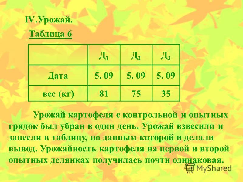 IV.Урожай. Д1Д1 Д2Д2 Д3Д3 Дата 5. 09 вес (кг)817535 Таблица 6 Урожай картофеля с контрольной и опытных грядок был убран в один день. Урожай взвесили и занесли в таблицу, по данным которой и делали вывод. Урожайность картофеля на первой и второй опытн