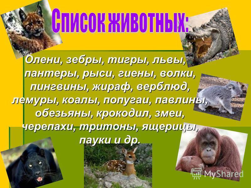 Олени, зебры, тигры, львы, пантеры, рыси, гиены, волки, пингвины, жираф, верблюд, лемуры, коалы, попугаи, павлины, обезьяны, крокодил, змеи, черепахи, тритоны, ящерицы, пауки и др.