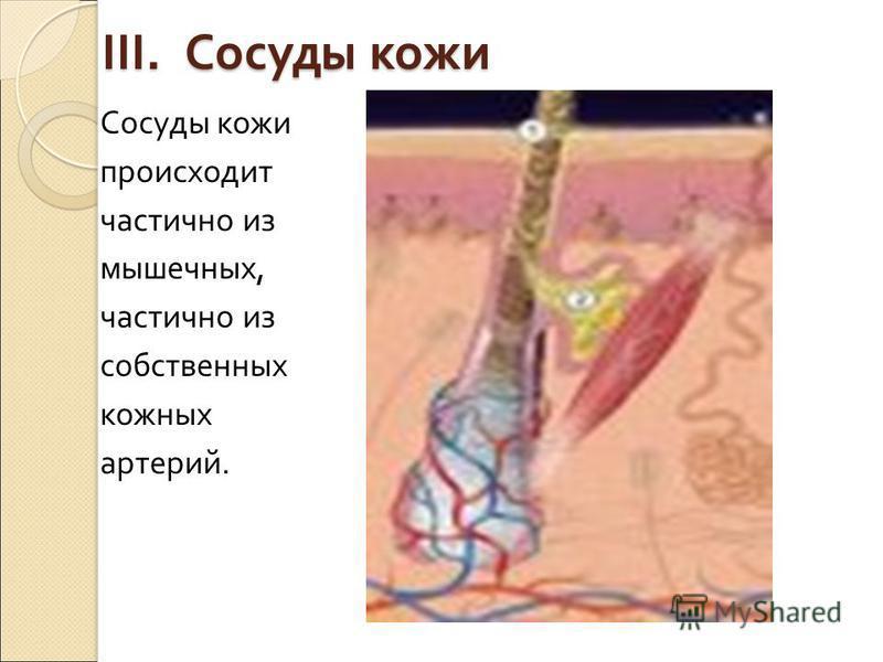 3. Молочные железы Молочные железы женщин являются парными кожными образованиями, которые филогенетически связаны с потовыми железами, а функционально с половым аппаратом. Эти органы представляют собой тела, состоящие из 15-20 сложных железок, окруже