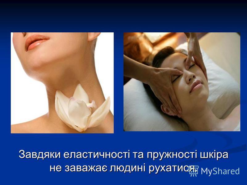 Завдяки еластичності та пружності шкіра не заважає людині рухатися.