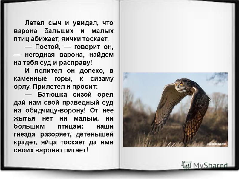 Летел сыч и увидал, что ворона больших и малых птиц обижает, яички таскает. Постой, говорит он, негодная ворона, найдем на тебя суд и расправу! И полетел он далеко, в каменные горы, к сизаму орлу. Прилетел и просит: Батюшка сизой орел дай нам свой пр
