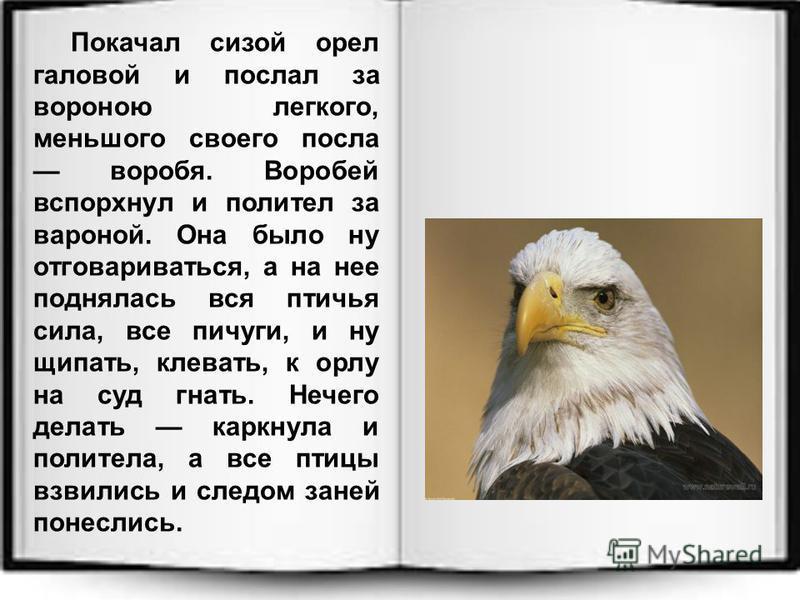 Покачал сизой орел головой и послал за вороною легкого, меньшого своего посла воробья. Воробей вспорхнул и полетел за вороной. Она было ну отговариваться, а на нее поднялась вся птичья сила, все пичуги, и ну щипать, клевать, к орлу на суд гнать. Нече