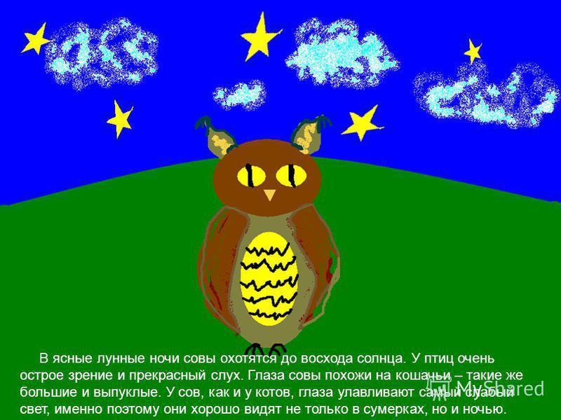 В ясные лунные ночи совы охотятся до восхода солнца. У птиц очень острое зрение и прекрасный слух. Глаза совы похожи на кошачьи – такие же большие и выпуклые. У сов, как и у котов, глаза улавливают самый слабый свет, именно поэтому они хорошо видят н