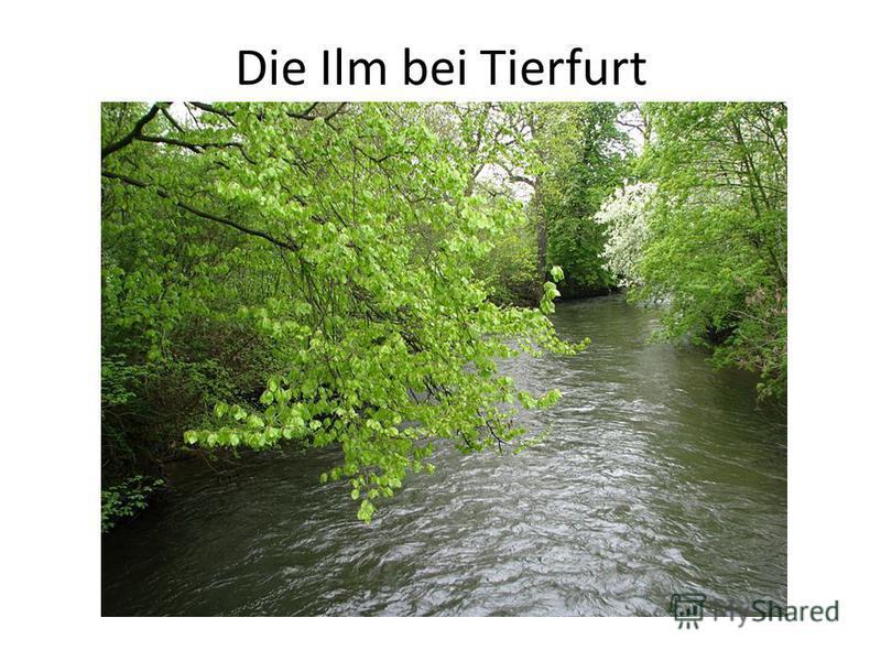 Die Ilm bei Tierfurt