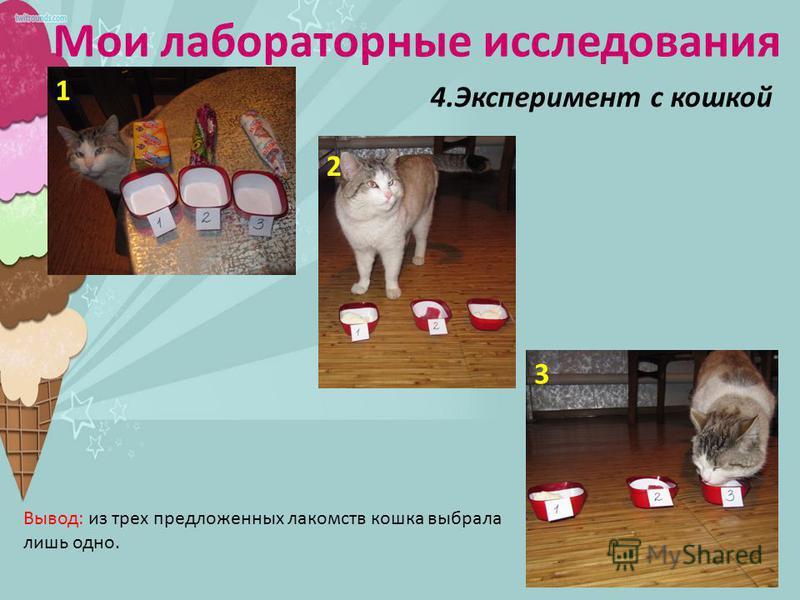 Мои лабораторные исследования 4. Эксперимент с кошкой 1 2 3 Вывод: из трех предложенных лакомств кошка выбрала лишь одно.