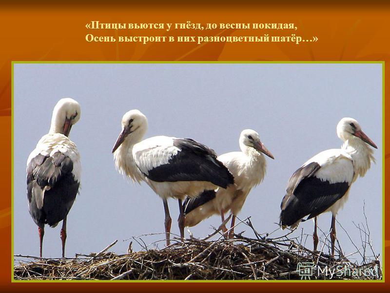«Птицы вьются у гнёзд, до весны покидая, Осень выстроит в них разноцветный шатёр…»