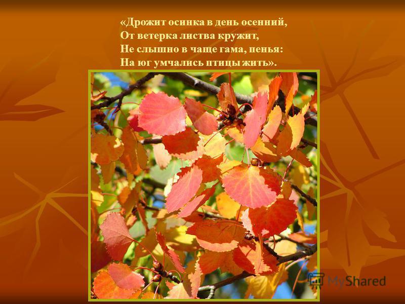 «Дрожит осинка в день осенний, От ветерка листва кружит, Не слышно в чаще гама, пенья: На юг умчались птицы жить».