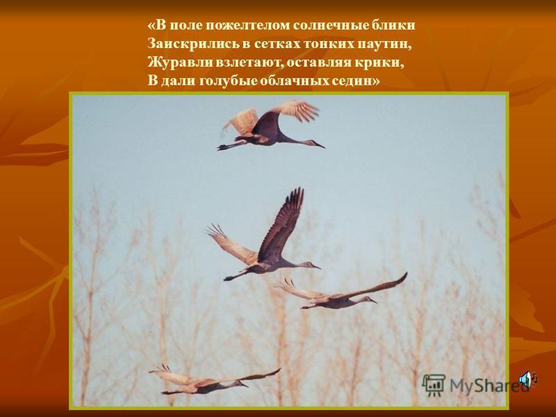 «В поле пожелтелом солнечные блики Заискрились в сетках тонких паутин, Журавли взлетают, оставляя крики, В дали голубые облачных седин»