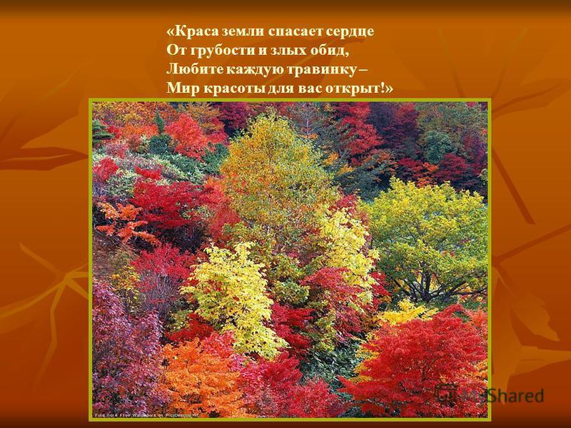 «Краса земли спасает сердце От грубости и злых обид, Любите каждую травинку – Мир красоты для вас открыт!»