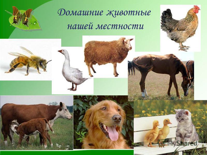 Дикие животные Алтайского края