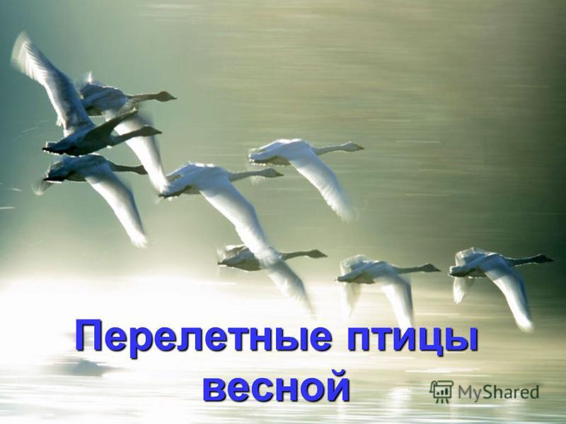 Перелетные птицы весной
