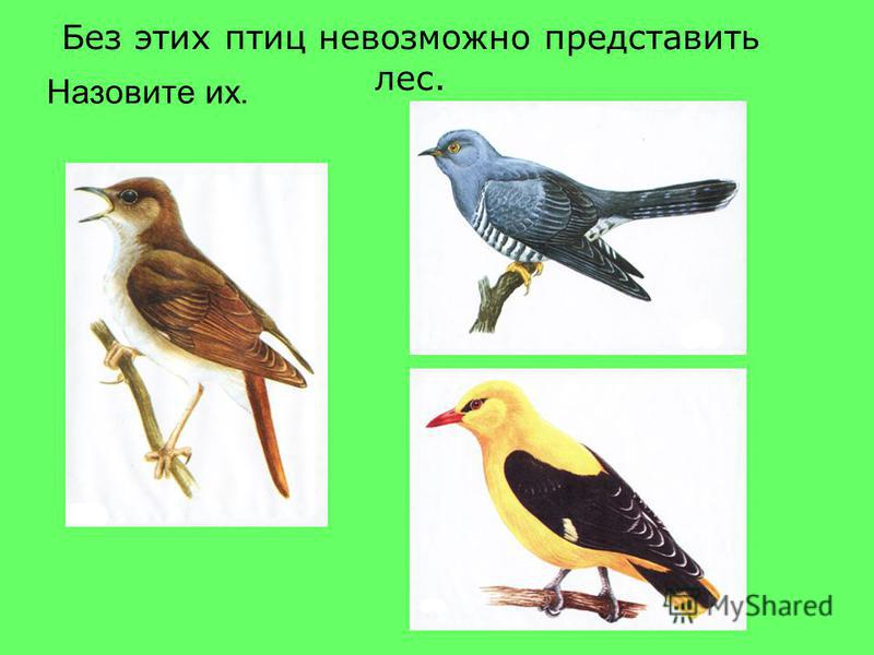 Без этих птиц невозможно представить лес. Назовите их.