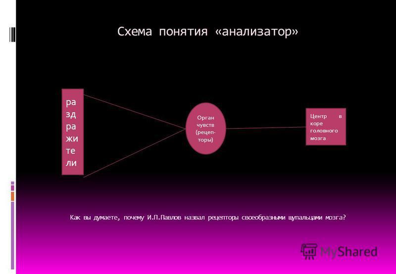 Схема понятия «анализатор» Как вы думаете, почему И.П.Павлов назвал рецепторы своеобразными щупальцами мозга? раздражители Орган чувств (рецепторы) Центр в коре головного мозга