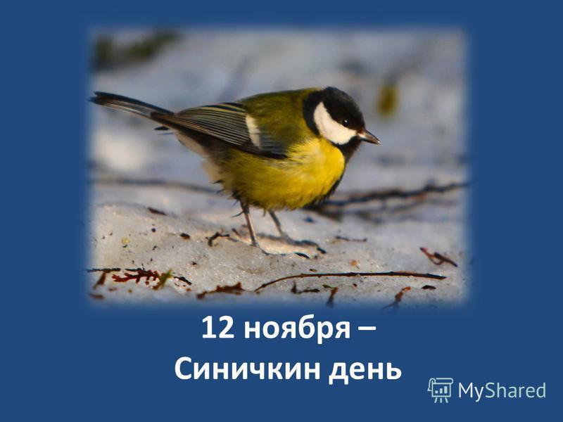 12 ноября – Синичкин день