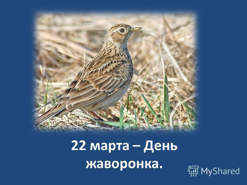 22 марта – День жаворонка.