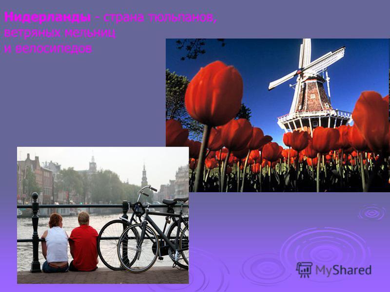 Нидерланды - страна тюльпанов, ветряных мельниц и велосипедов