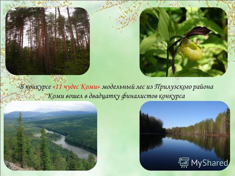 В конкурсе «11 чудес Коми» модельный лес из Прилузского района Коми вошел в двадцатку финалистов конкурса