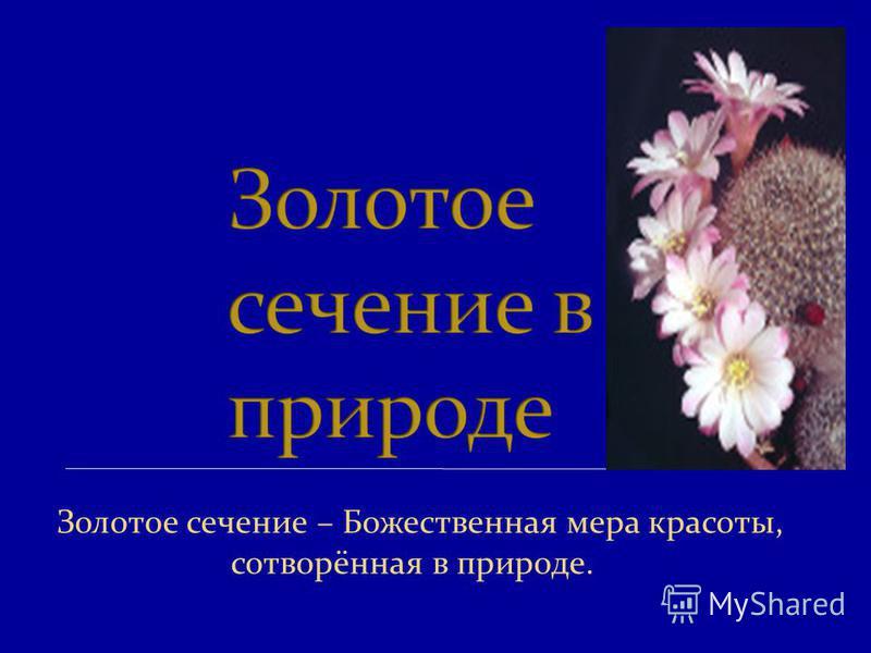 Золотое сечение – Божественная мера красоты, сотворённая в природе.