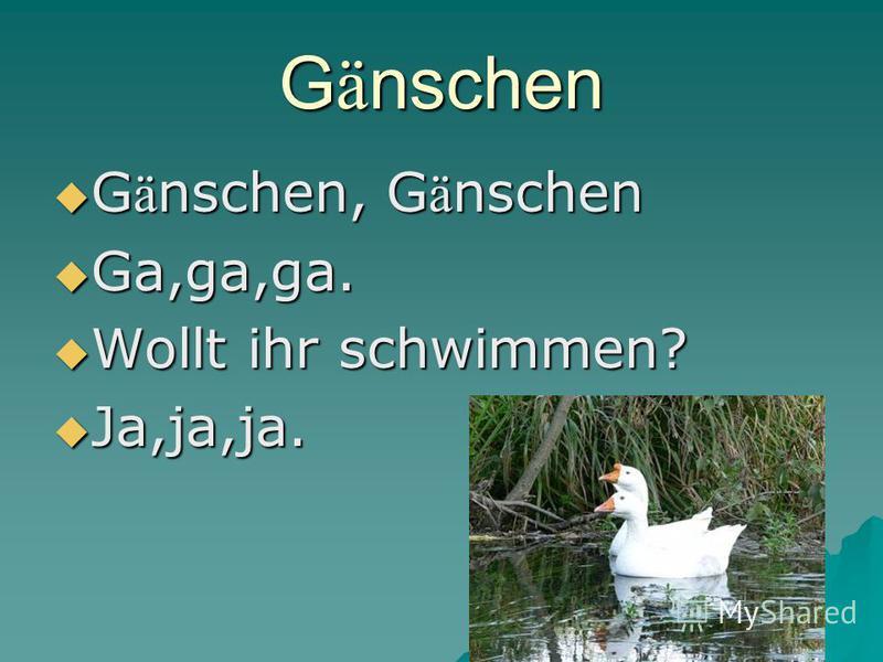 G ä nschen G ä nschen, G ä nschen G ä nschen, G ä nschen Ga,ga,ga. Ga,ga,ga. Wollt ihr schwimmen? Wollt ihr schwimmen? Ja,ja,ja. Ja,ja,ja.