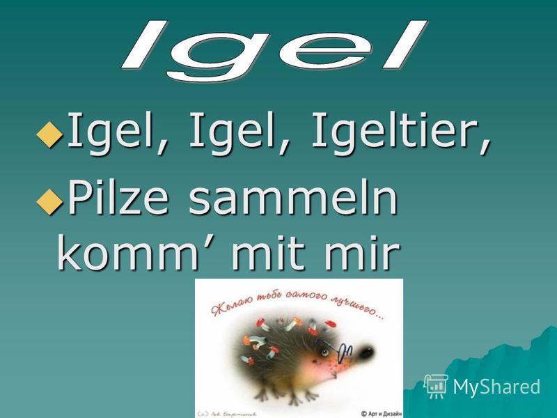 Igel, Igel, Igeltier, Igel, Igel, Igeltier, Pilze sammeln komm mit mir Pilze sammeln komm mit mir