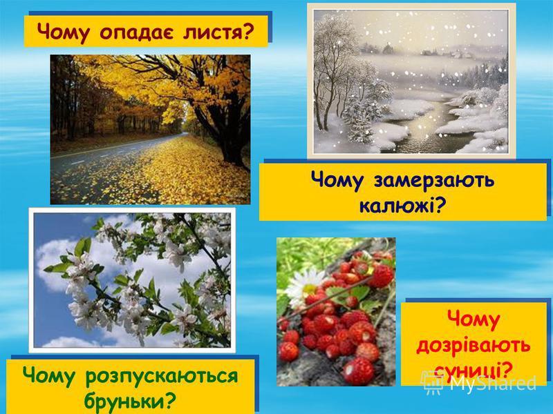 Чому опадає листя? Чому розпускаються бруньки? Чому дозрівають суниці? Чому замерзають калюжі?