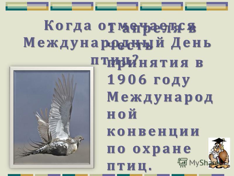Непоседа, пёстрая, Птица длиннохвостая, Птица говорливая, Самая болтливая. Сорока.