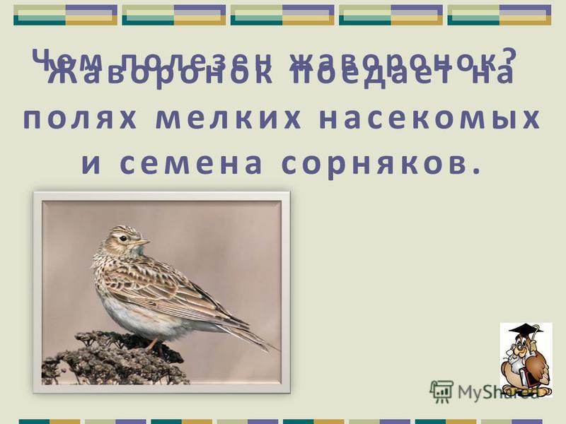 Какая птица является символом мудрости? Сова