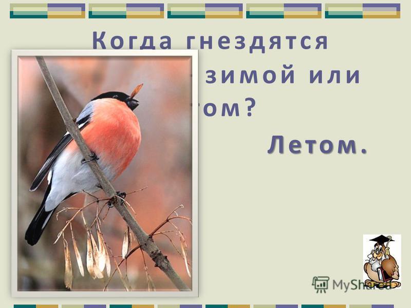 И петь не поёт, И петь не поёт, И летать не летает, А птица самая большая… Страус