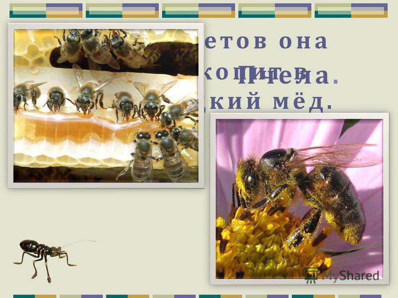 Какое растение является хищником для насекомых? Росянка.