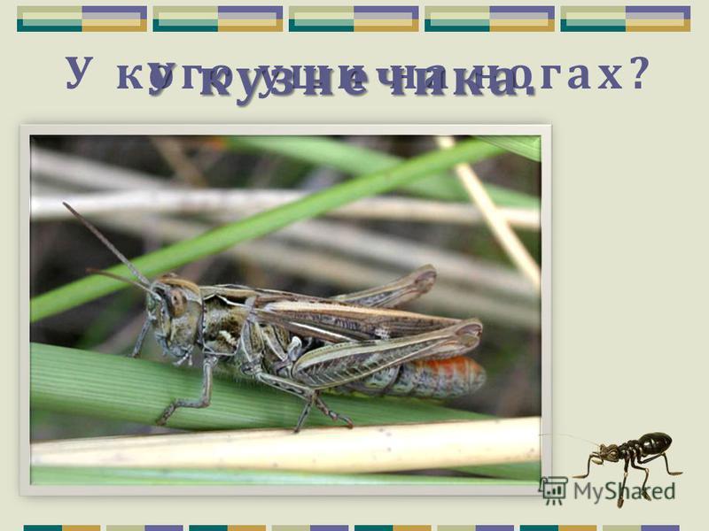 Воздушный хищник, который схватывает на лету мух, комаров, бабочек. Стрекоза.
