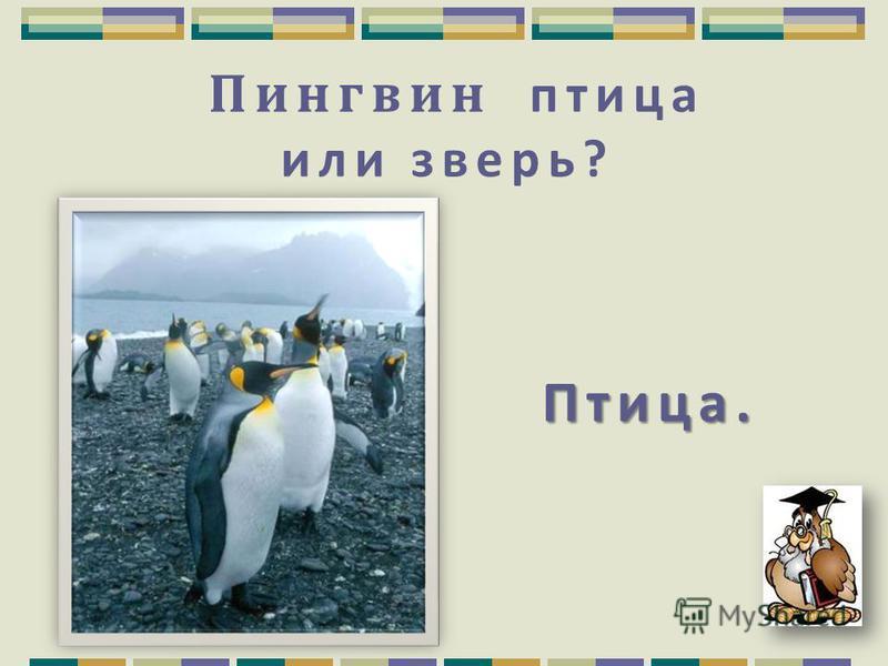 Перед какой погодой птицы перестают петь? Перед дождливой.