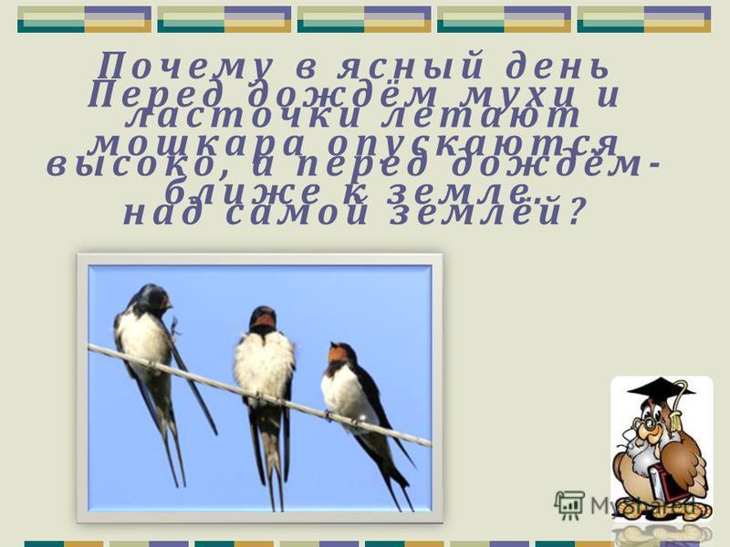 Узнайте птицу по голосу.
