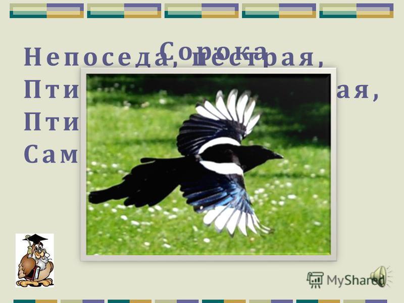Головы каких птиц изображены? Аист Пеликан Воробей Фламинго 1. 2. 3. 4.