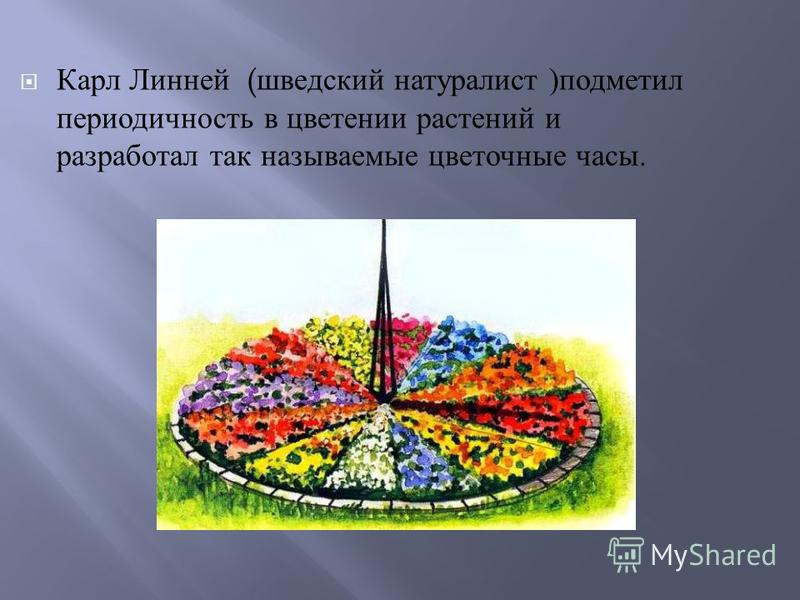 Карл Линней ( шведский натуралист ) подметил периодичность в цветении растений и разработал так называемые цветочные часы.