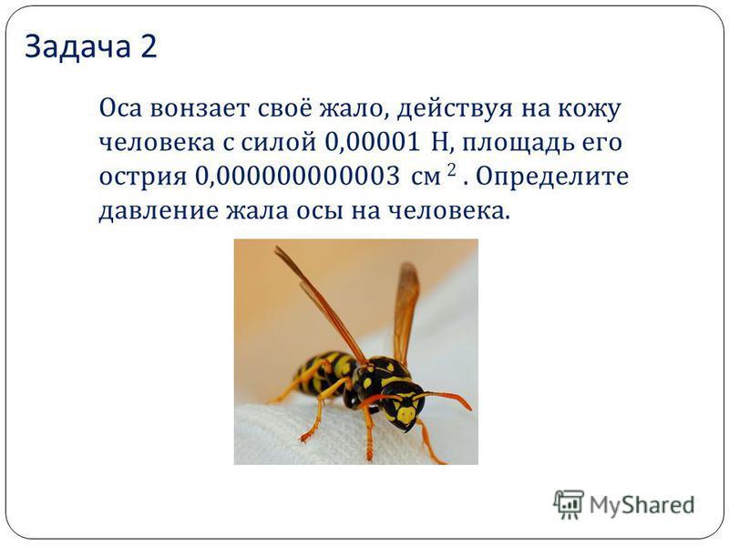 Задача 2 Оса вонзает своё жало, действуя на кожу человека с силой 0,00001 Н, площадь его острия 0,000000000003 см 2. Определите давление жала осы на человека.