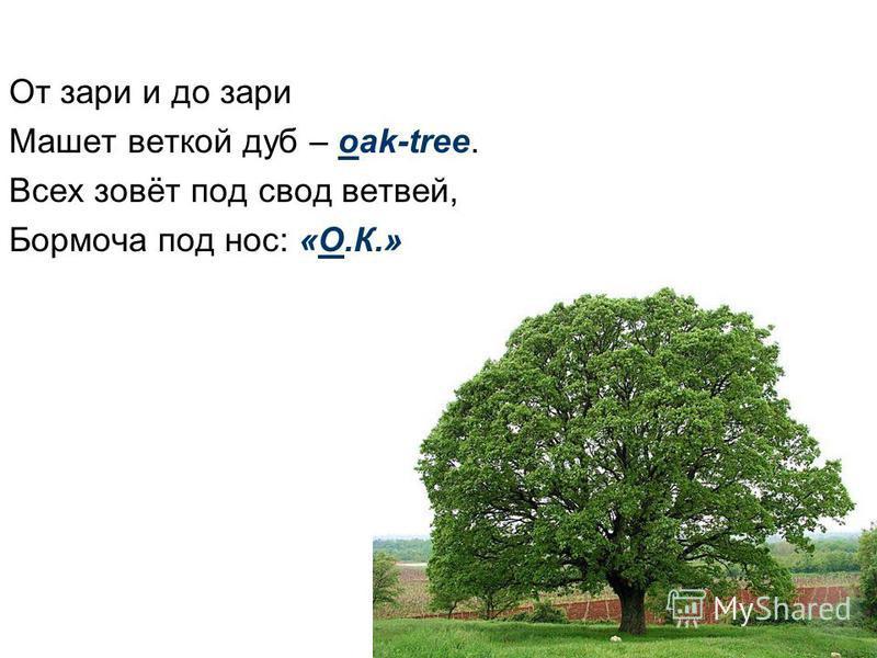 От зари и до зари Машет веткой дуб – oak-tree. Всех зовёт под свод ветвей, Бормоча под нос: «О.К.»