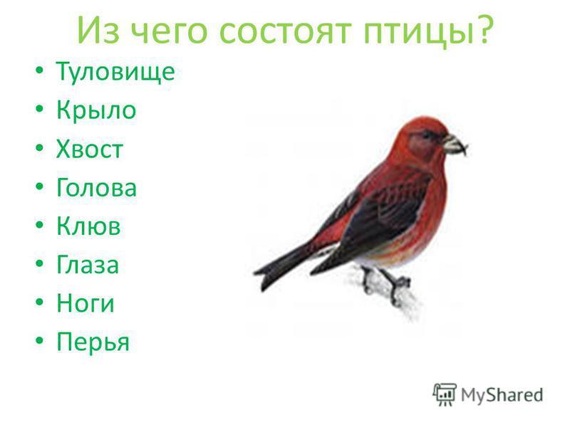 Из чего состоят птицы? Туловище Крыло Хвост Голова Клюв Глаза Ноги Перья