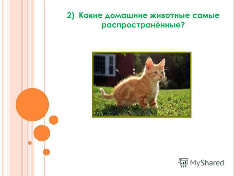 2) Какие домашние животные самые распространённые?