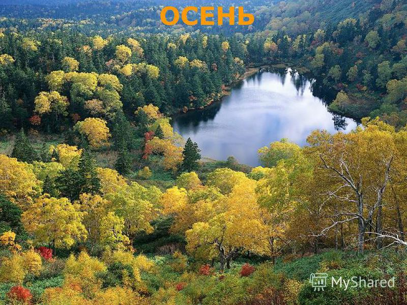musafirova.ucoz.ru Прошла по лугам, по лесам, по полям. Припасы она заготовила нам. Упрятала их в погреба, в закрома. Сказала: «За мною нагрянет зима.
