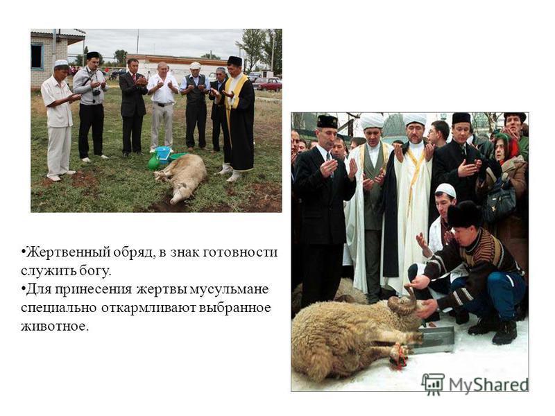 Жертвенный обряд, в знак готовности служить богу. Для принесения жертвы мусульмане специально откармливают выбранное животное.