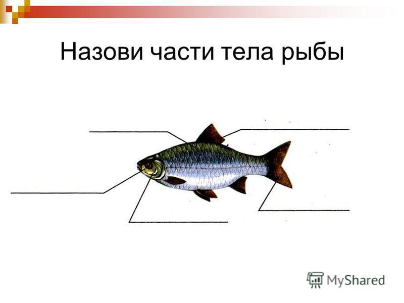 Назови части тела рыбы
