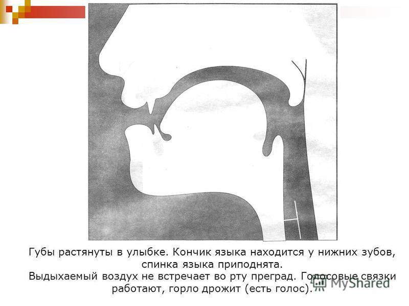 Губы растянуты в улыбке. Кончик языка находится у нижних зубов, спинка языка приподнята. Выдыхаемый воздух не встречает во рту преград. Голосовые связки работают, горло дрожит (есть голос).