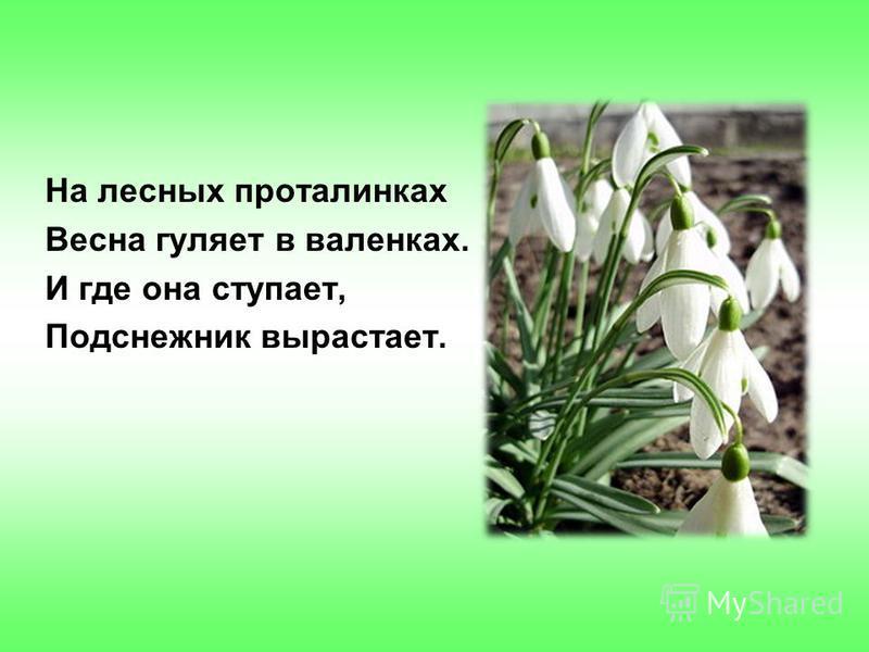 На лесных проталинках Весна гуляет в валенках. И где она ступает, Подснежник вырастает.