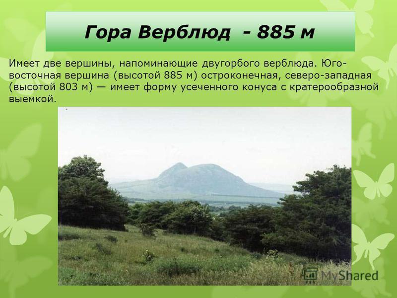 Гора Верблюд - 885 м Имеет две вершины, напоминающие двугорбого верблюда. Юго- восточная вершина (высотой 885 м) остроконечная, северо-западная (высотой 803 м) имеет форму усеченного конуса с кратерообразной выемкой.