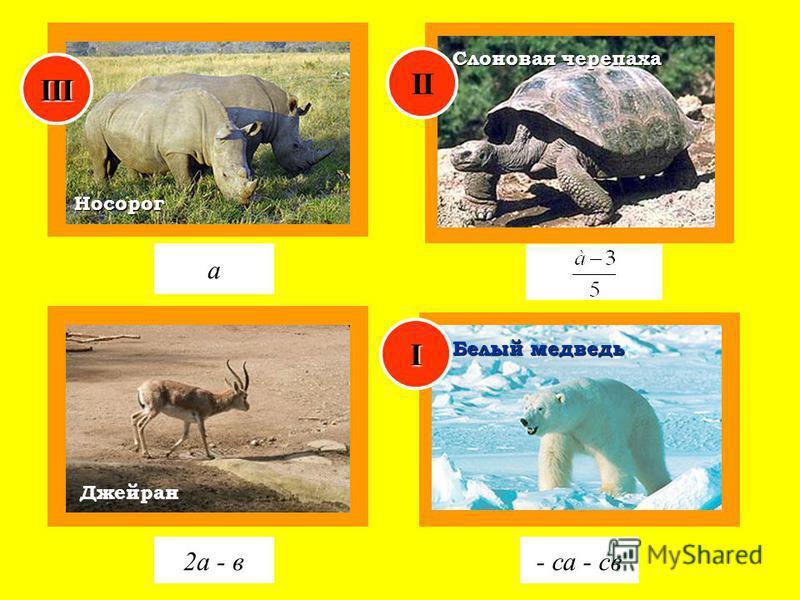 Джейран Носорог а 2 а - в- са - св Слоновая черепаха Белый медведь I II III