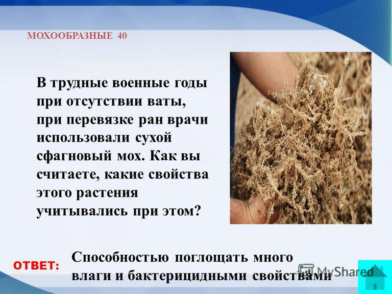 МОХООБРАЗНЫЕ 40 В трудные военные годы при отсутствии ваты, при перевязке ран врачи использовали сухой сфагновый мох. Как вы считаете, какие свойства этого растения учитывались при этом? Способностью поглощать много влаги и бактерицидными свойствами