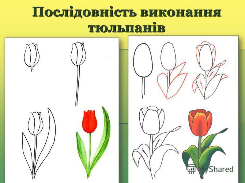 Послідовність виконання тюльпанів