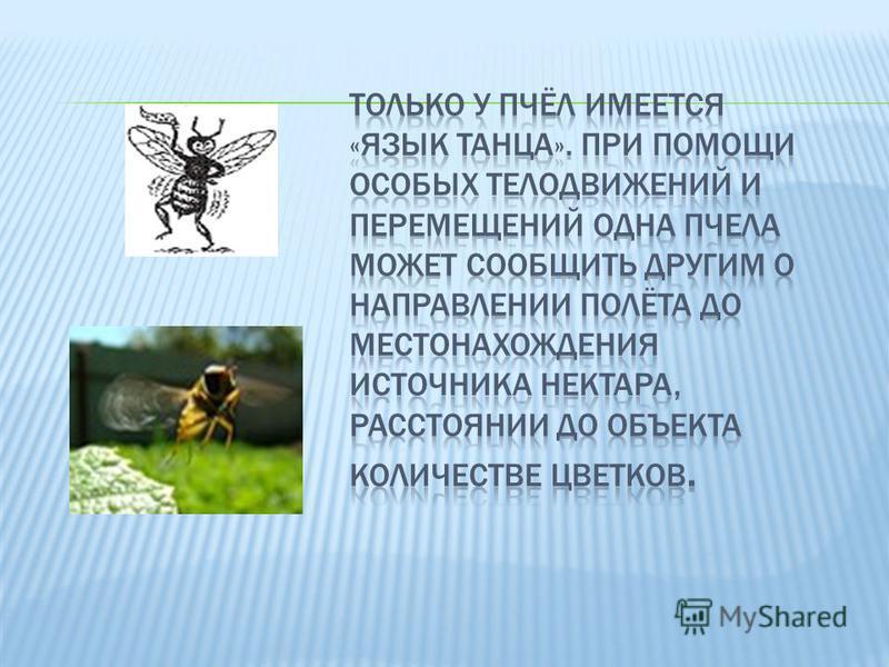 Рабочая пчела в течение своей жизни выполняет различные виды работ. Первая по времени работа состоит в очистке ячеек, в которые матка откладывает яйца, а также в обогревании и вентиляции улья. Затем рабочие пчелы переходят к кормлению молодых пчелок